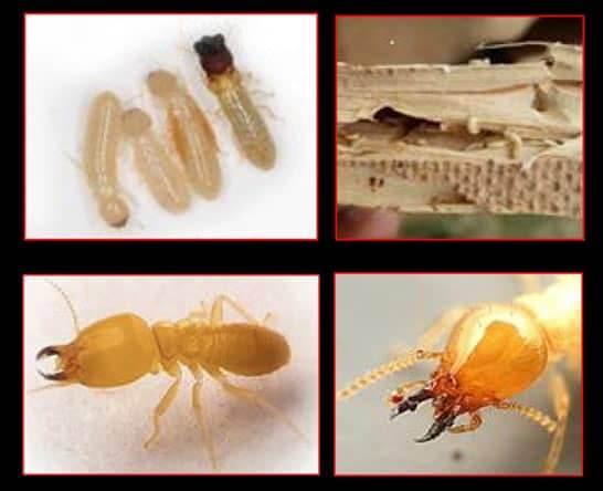 termite-service-mpi.jpg